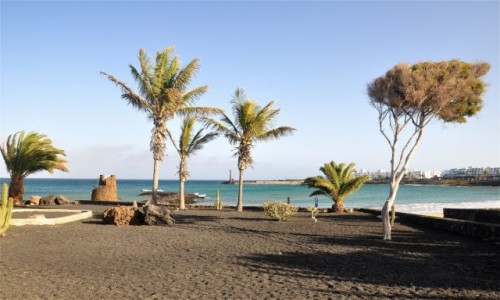 Zdjecie HISZPANIA / Wyspy Kanaryjskie / Lanzarote / Roślinność w Costa Teguise