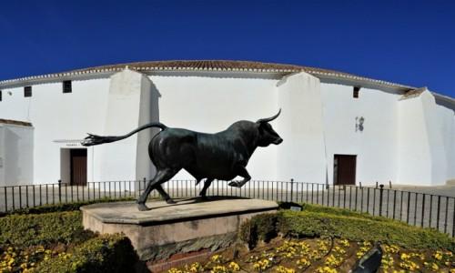 Zdjęcie HISZPANIA / Andaluzja / Ronda / Spiżowy bysio