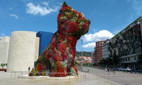 Zdjęcie HISZPANIA / Kraj Basków / Bilbao / Kotek