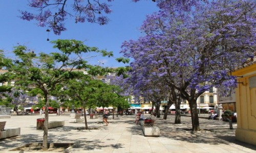 Zdjecie HISZPANIA / Andaluzja / Malaga / Wiosna w Maladze