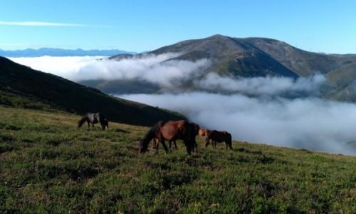Zdjęcie HISZPANIA / Asturia / A Mesa / Konie na wrzosowisku