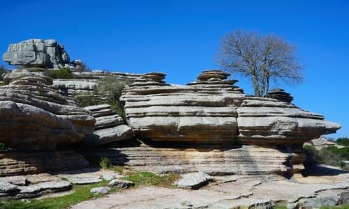 Zdjecie HISZPANIA / Andaluzja / El Torcal de Antequera / Grupa skał z drzewem