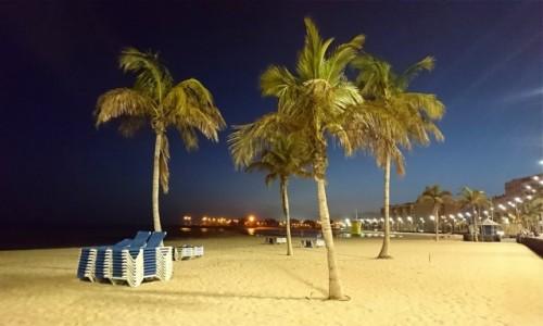 Zdjecie HISZPANIA / Wyspy Kanaryjskie / Lanzarote / Palmy kokosowe