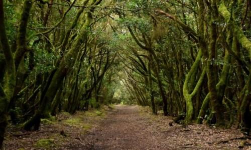 HISZPANIA / La Gomera / Park Narodowy Garajonay / W lesie laurowym