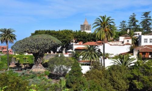 HISZPANIA / Teneryfa / Icod de los Vinos / Pejzaż z najstarszą na świecie draceną