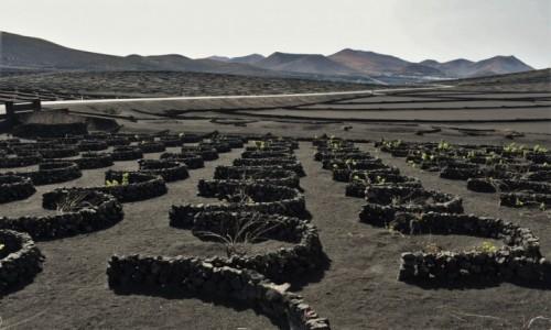 Zdjecie HISZPANIA / Wyspy Kanaryjskie / Parque Nacional de Timanfaya / Lanzarote, winnice