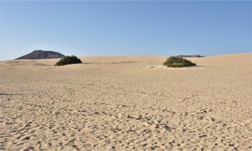 Zdjecie HISZPANIA / Fuertaventura / Corralejo / Corralejo, wydmy