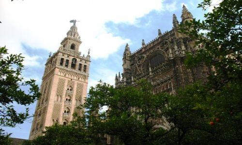 Zdjecie HISZPANIA / Andaluzja / Sewilla / Giralda, katedra i pomarańcze
