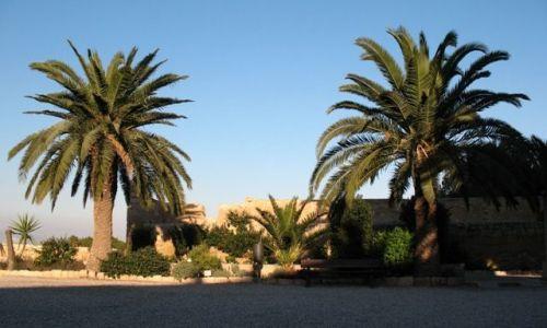 Zdjecie HISZPANIA / Valencia / Alicante / palmy idealne