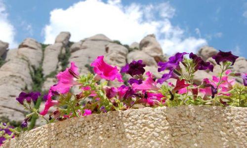 Zdjecie HISZPANIA / Barcelona / Barcelona / Kwiatki :)