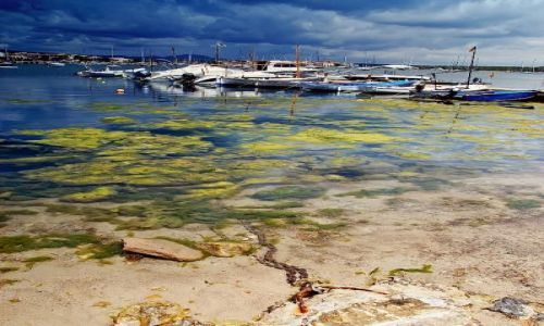 Zdjęcie HISZPANIA / Majorca / brak / Na łańcuchu