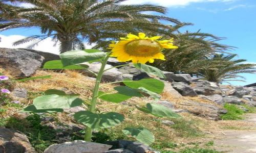 Zdjecie HISZPANIA / Teneryfa, Playa de las Americas / Playa del Bobo / outsider:-)