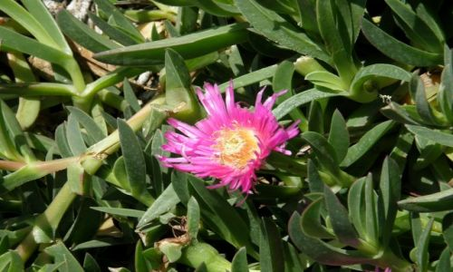 Zdjęcie HISZPANIA / Andalucia / przy drodze / Kwiaty świata:)