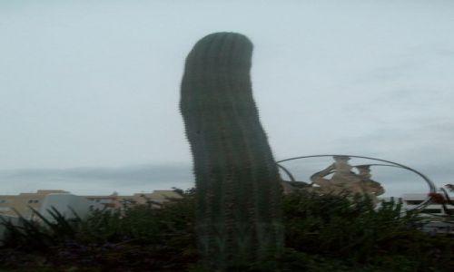 Zdjęcie HISZPANIA / Ibiza / Evissa / Kaktusik nocą (wysokość 2,5 metra)