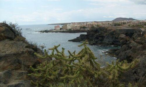 Zdjecie HISZPANIA / teneryfa / las galletas / kaktus na zboczu