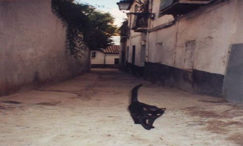 Zdjecie HISZPANIA / Granada / Granada / Kot z Granady :)