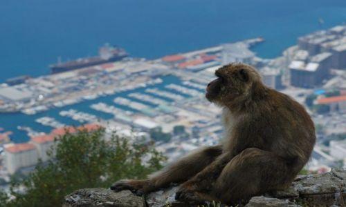 Zdjecie HISZPANIA / Andaluzja / Gibraltar / widok na zatoke