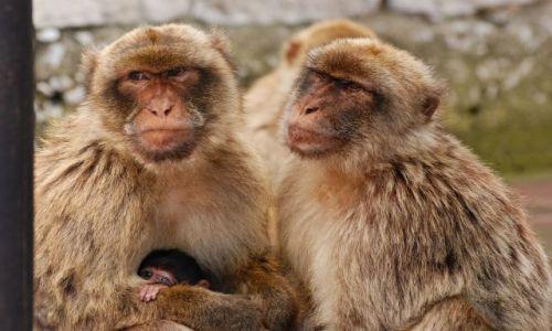Zdjecie HISZPANIA / Andaluzja / Gibraltar / i rodzinka w ko