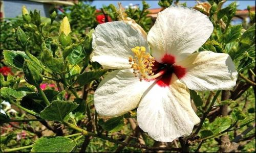 Zdjecie HISZPANIA / Andaluzja / Torremolinos / Kwiaty Torremolinos