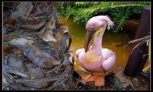 Zdjęcie HISZPANIA / Wyspy Kanaryjskie / Gran Canaria - Palmitos Park / Pierzaste piękności