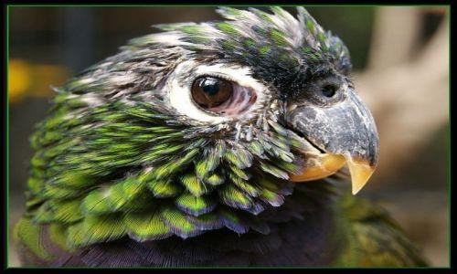 Zdjecie HISZPANIA / Wyspy Kanaryjskie / Gran Canaria - Palmitos Park / Spojrzenie papugi