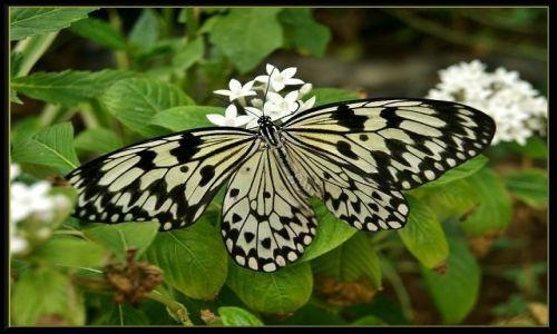 Zdjęcie HISZPANIA / Wyspy Kanaryjskie / Gran Canaria - Palmitos Park / Motylek