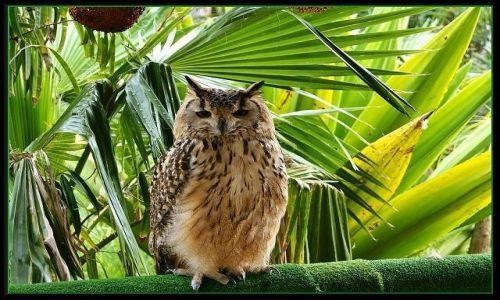 Zdjecie HISZPANIA / Wyspy Kanaryjskie / Gran Canaria - Cocodrilo  Park / Mądrala