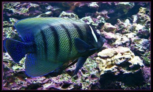 HISZPANIA / Gran Canaria / Palmitos Park / Przez szybę akwarium