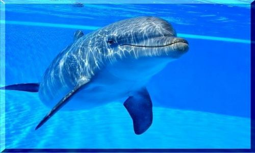 Zdjecie HISZPANIA / Gran Canaria / Palmitos Park / Przez szybę delfinarium -  usmiech delfina