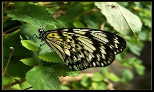 Zdjecie HISZPANIA / Wyspy Kanaryjskie - Gran Canaria / Palmitos Park / Motylek