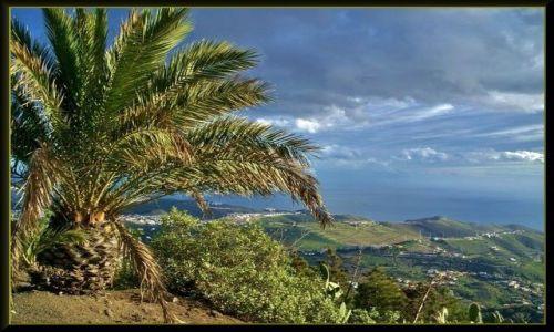Zdjecie HISZPANIA / Wyspy Kanaryjskie / Gran Canaria / Krajobraz z palmą