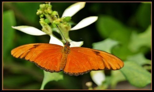 Zdjecie HISZPANIA / Gran Canaria / Palmitos Park / Motylek