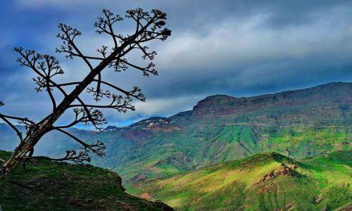 HISZPANIA / Gran Canaria / Gran Canaria / Opadające drzewko