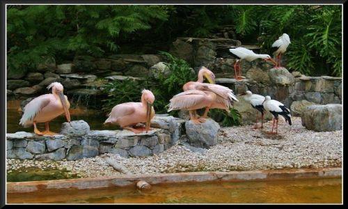 Zdjecie HISZPANIA / Gran Canaria / Palmitos Park / W zgodzie