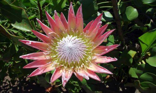 Zdjecie HISZPANIA / Wyspy Kanaryjskie, La Gomera / Ogród botaniczny w Agulo / Piękność
