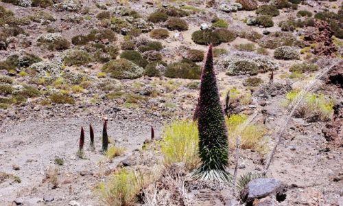Zdjęcie HISZPANIA / Wyspy Kanaryjskie, Teneryfa / Parque Nacional del Teide, Las Canadas / Las Canadas