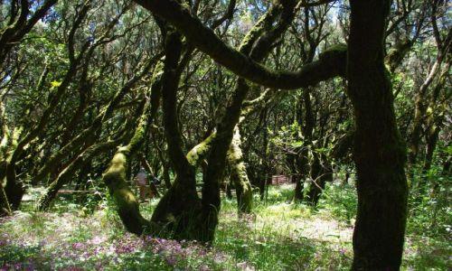 Zdjecie HISZPANIA / Wyspy Kanaryjskie, La Gomera / Parque Nacional de Garajonay / Konkurs - Laura silva