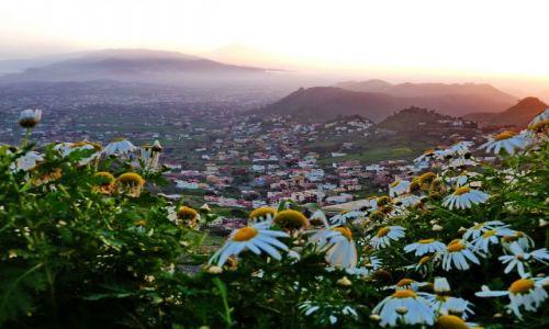 Zdjęcie HISZPANIA / Teneryfa / La Laguna / Kwiatki o zachodzie słońca