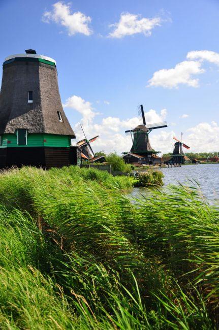 Zdjęcia: Zaans, pod Amsterdamem, Miele i miele ..., HOLANDIA