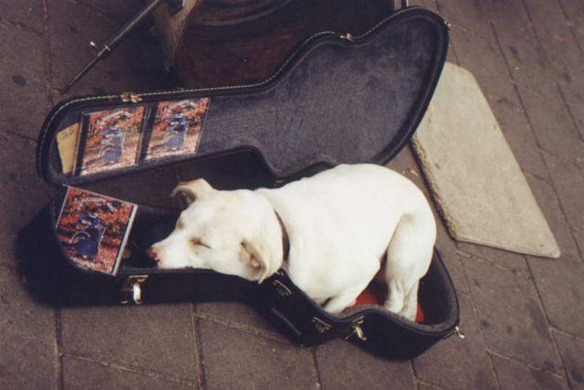 Zdjęcia: Amsterdam, Amsterdam, Futerał na psa, HOLANDIA
