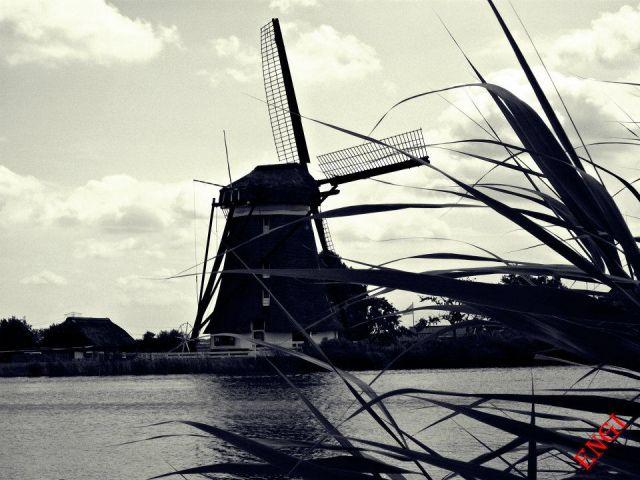 Zdjęcia: Bleiswijk, Stary wiatrak, HOLANDIA