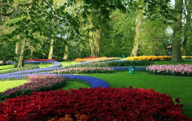 Zdjęcia: Ogrody Keukenhof, Amsterdam, Barwna kompozycja, HOLANDIA