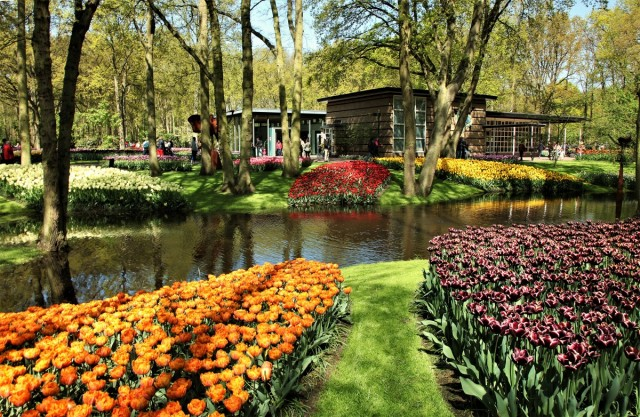 Zdjęcia: Ogrody Keukenhof , Amsterdam, To warto zobaczyć, HOLANDIA
