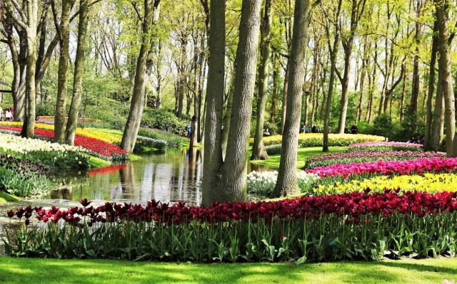 Zdjęcia: Ogrody Keukenhof , Amsterdam, Ogród w cieniu drzew, HOLANDIA