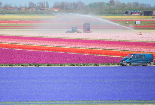 Zdjęcia: Den Helder, Alkmaar, Bajeczne pola, HOLANDIA