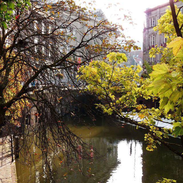 Zdjęcia: Utrecht, Utrecht, Drzewostan nad kanałem, HOLANDIA