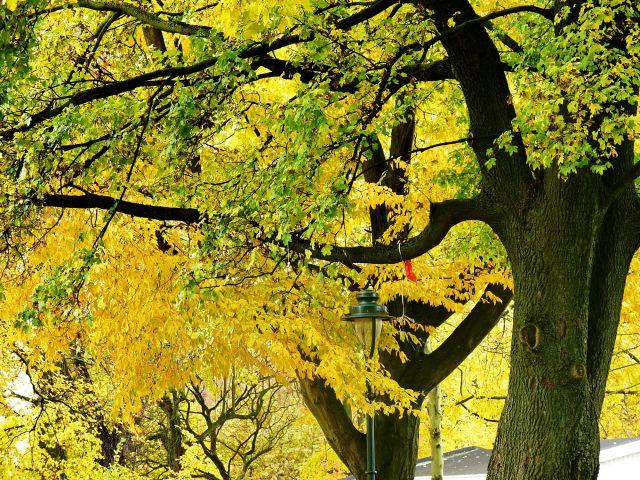 Zdjęcia: Hengelo, Overijssel, Barwy jesieni , HOLANDIA