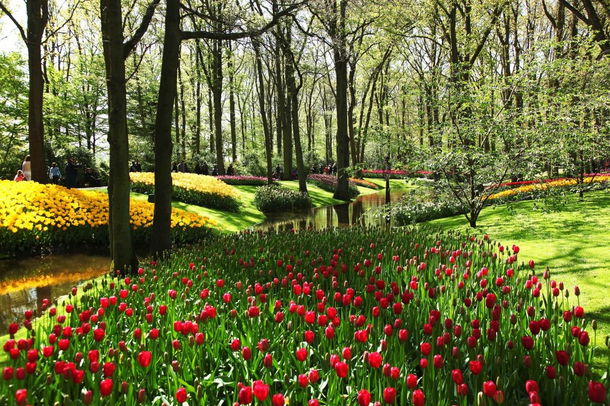Zdjęcia: Ogrody Keukenhof, Amsterdam, Tulipanowy zawrót głowy, HOLANDIA