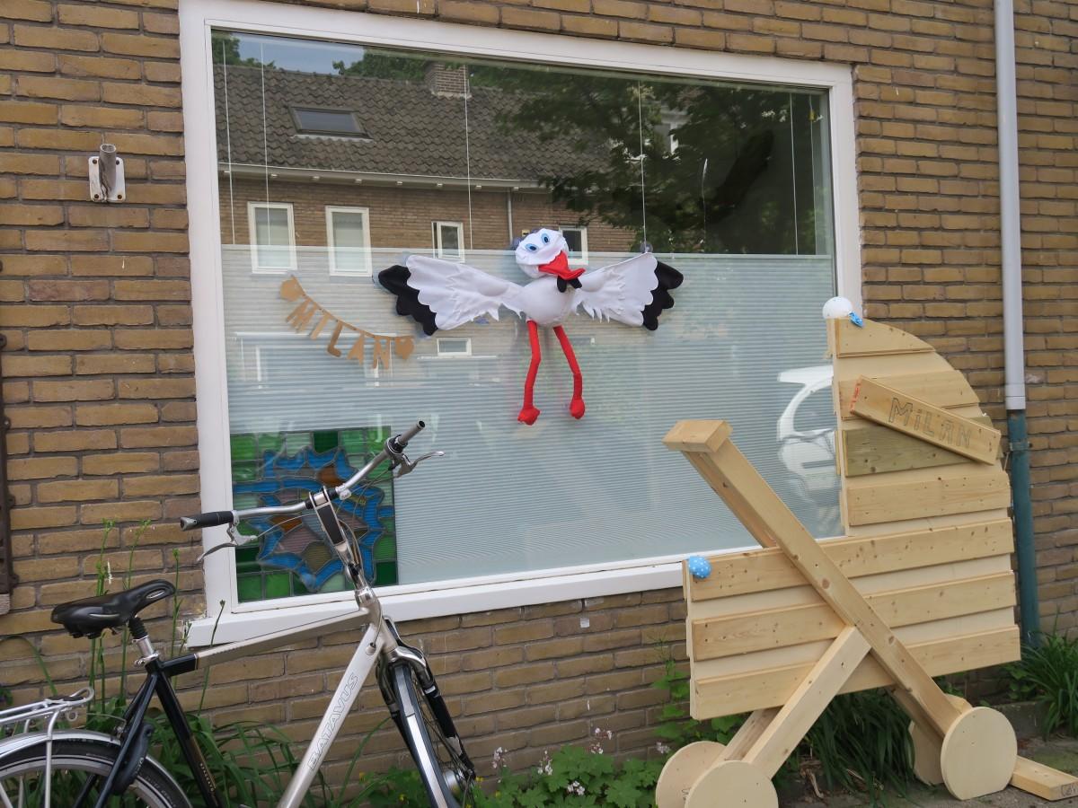 Zdjęcia: Zwolle, Zwolle, Powitanie nowego członka rodziny, HOLANDIA