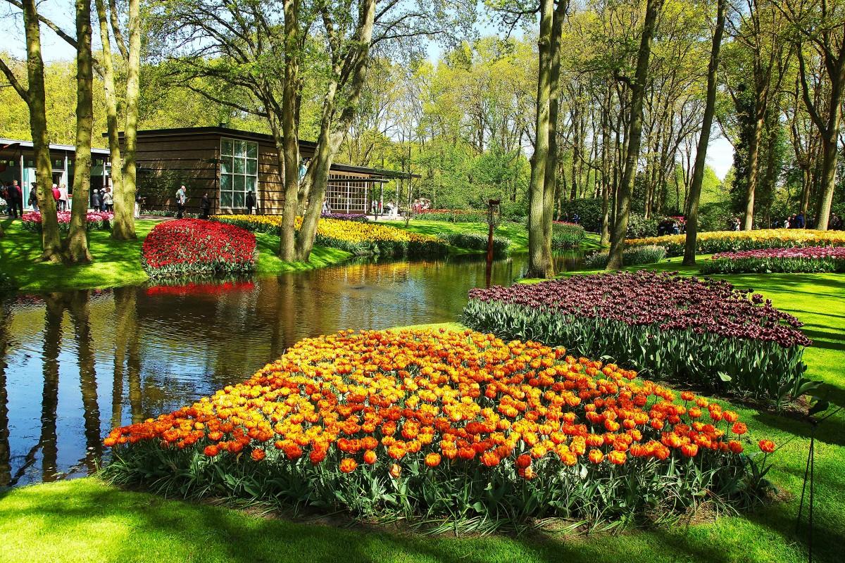 Zdjęcia: Ogrody Keukenhof, Amsterdam , Tulipanowe kobierce, HOLANDIA